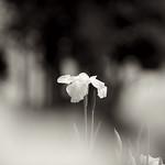 平成の森 2013 #