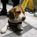 Doggie Security Industrial Complex