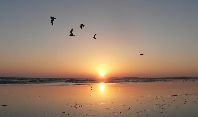 Seagulls' Dreamy Sunset.
