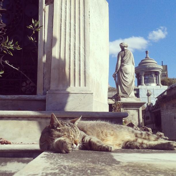 Gatico en Cementerio de la Recoleta