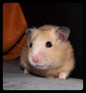 """Portrait für 26.13 """"El Hamster"""" :)"""