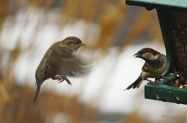 Bird Feeder Conflict