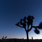 Twilight at Joshua Tree