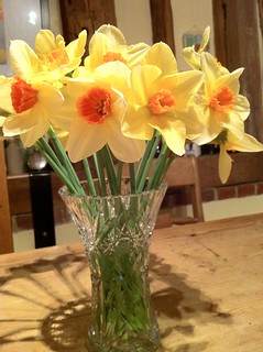 Daffodils in vase | by nickodoherty