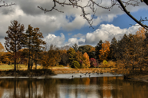 autumn color reflection fall clouds geese pond day cloudy crosbygardens toledobotanicalgardens nikond7000