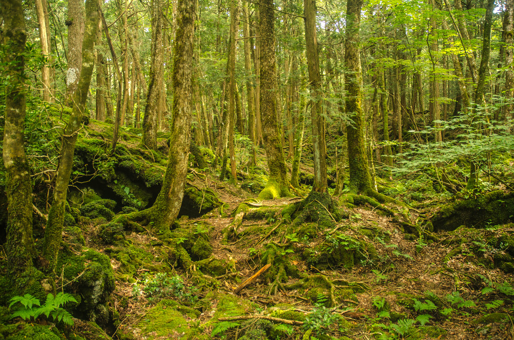 Aokigahara Aokigahara The Sea Of Trees Is A Region