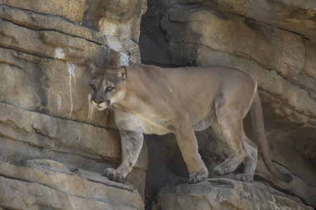Houston Zoo_142