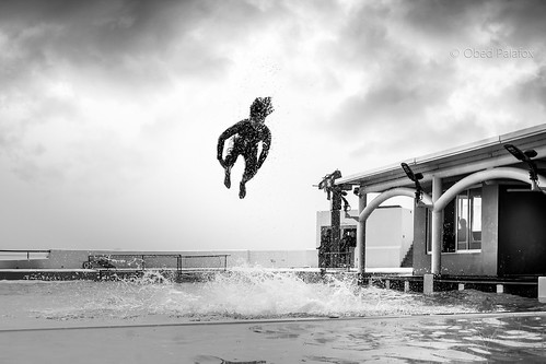 Entrenador en acción en el acuario de Veracruz