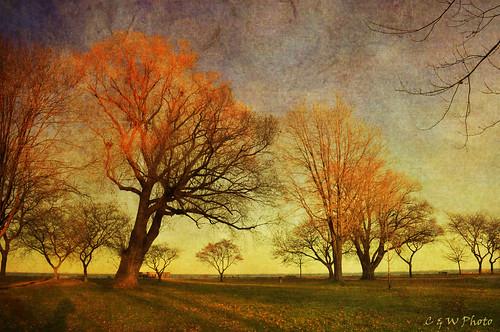 autumn trees sunset fall texture colors nikon solitude treebranch latefall metropark landscrape memoriesbook