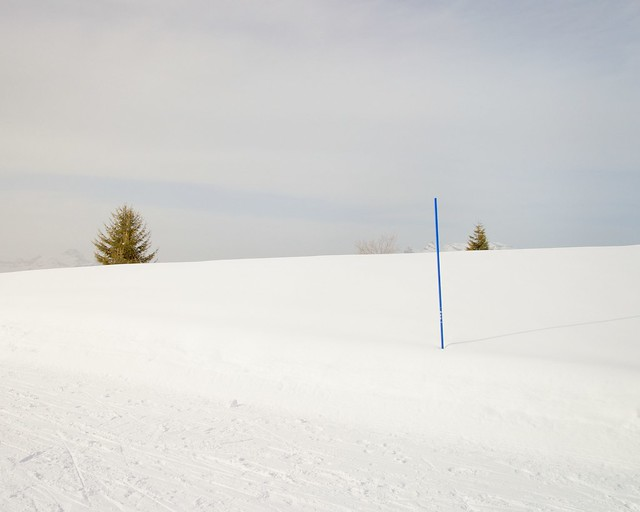 snow, pole and treetops
