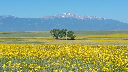 nature beauty yellow colorado falconcolorado
