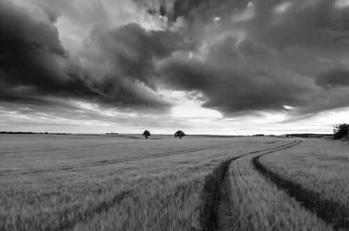 sunset tree field clouds moody wheat stormy crops sunsetaugust2013