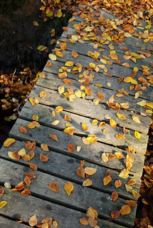 leafy bridge   by amigadave
