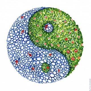 yin-yang-pond | by Frits Ahlefeldt FritsAhlefeldt.com