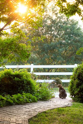 kitty cat sunset blueridgemountains greenville sc landrum