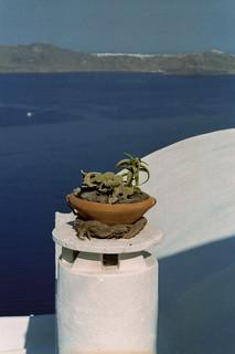 06-santorini-cactus