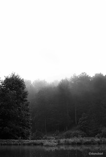 foggy morning | by dondiartphotography @ gmail.com