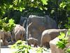 Zoo Praha, foto: Petr Nejedlý