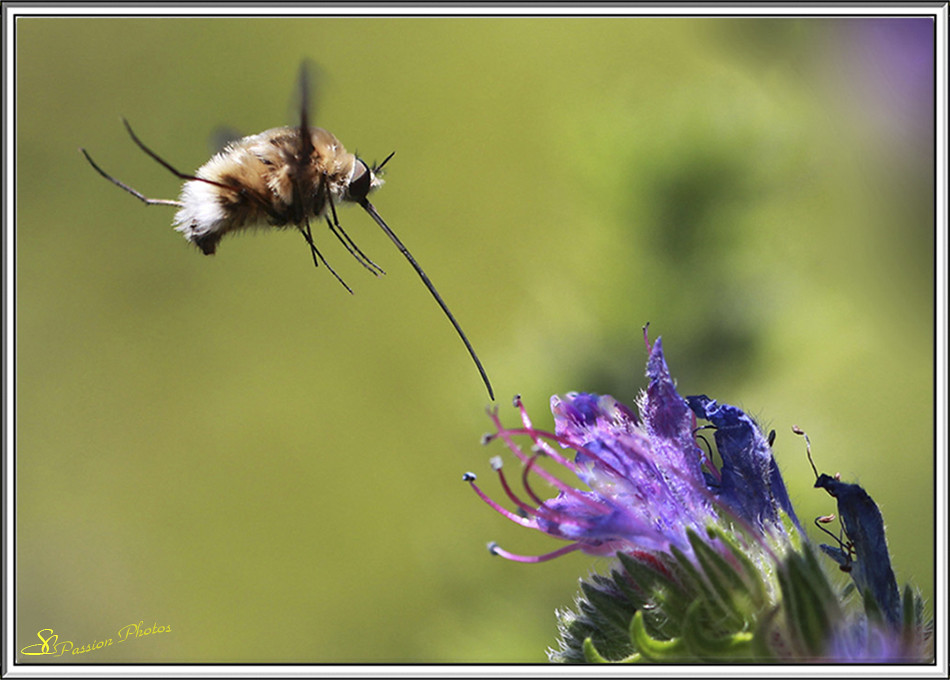 insectes 1
