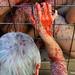 01_12_2013 Protesta contra el uso de abrigos de piel