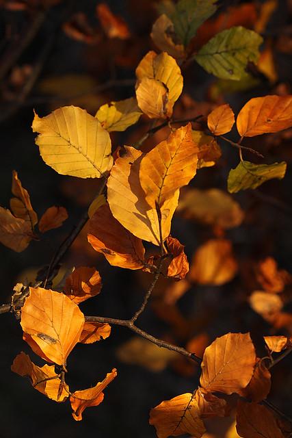 Reminder of Autumn
