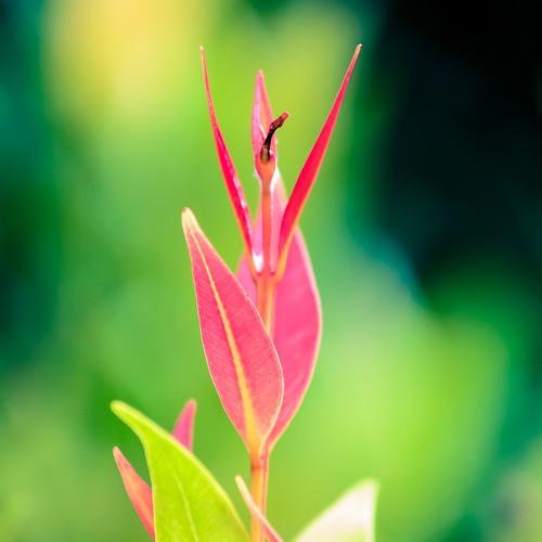 red flower color detail green nature up leaves contrast landscape photography nikon close bokeh background filter qahar syauqi d5100