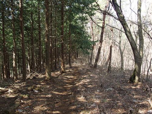 Trail to Mount Momokurasan @ Hike to Mount Ougiyama & Mount Momokurasan @ Yamanashi Prefecture | by *_*