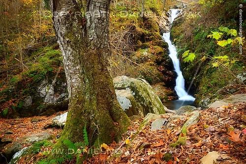 park autumn tree fall nature forest landscape outdoors photography virginia waterfall nationalpark woods rocks unitedstates hike falls trail va syria darkhollow