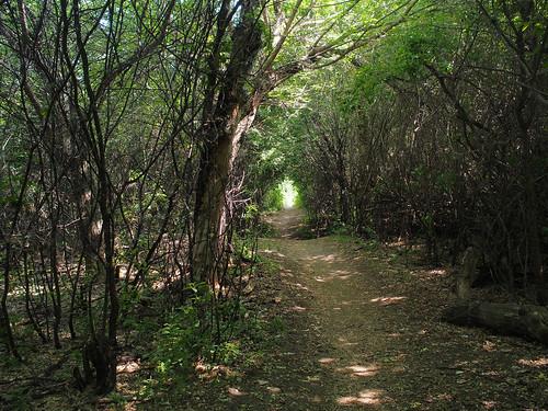 trees canada wow dark woods path deep olympus saskatoon saskatchewan omd em5