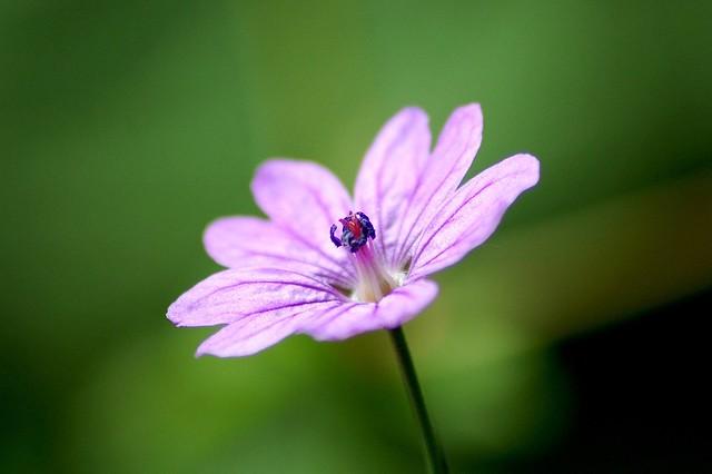 Little Purple Beauty