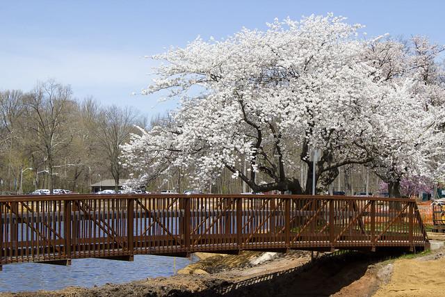 Nomahegan Spring 2013