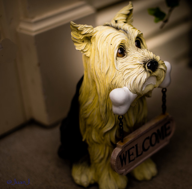 Welcome - Doggie at the Door