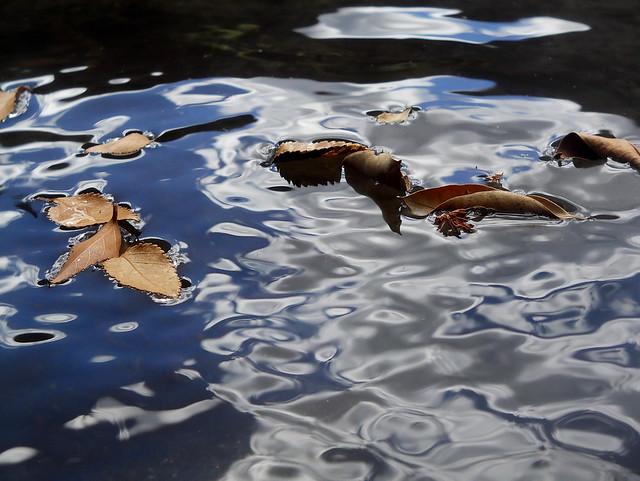 hojas secas, lago