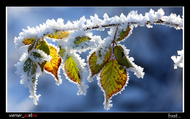 12-13 frost_1401