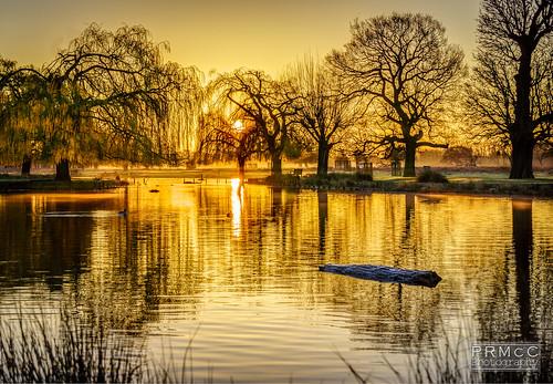 uk trees england london sunrise landscape unitedkingdom surrey hdr goldenhour lightroom bushypark hamptonwick photomatix nex7