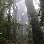 07 Viajefilos en Australia. Dorrigo Rainforest NP 27