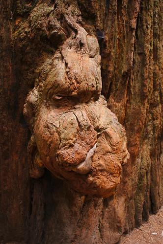 california trees walking redwoods stoutgrove