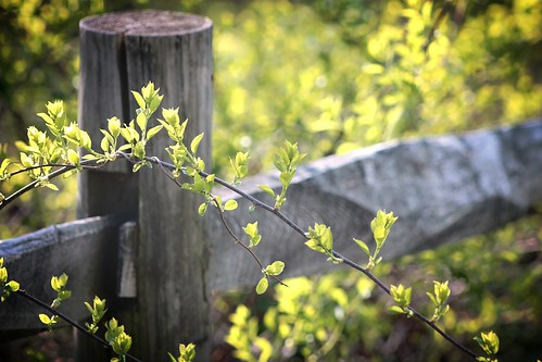 sunlight green nature leaves fence spring bokeh woodenfence springtime fencepost lincolnri blackstoneriverbikeway