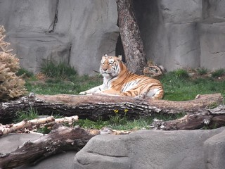 2012 Brookfield Zoo Sleepover | by Sequoia Nation Indian Guides and Princesses