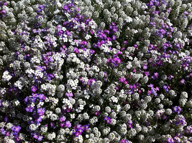 Flors al llit del Túria