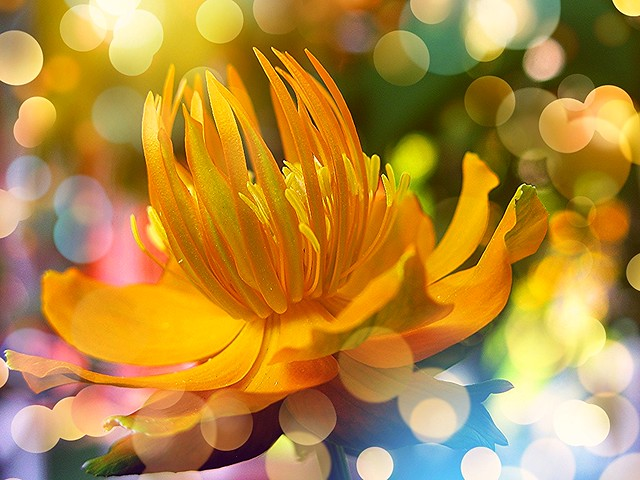 Fizzy Flowers :-)