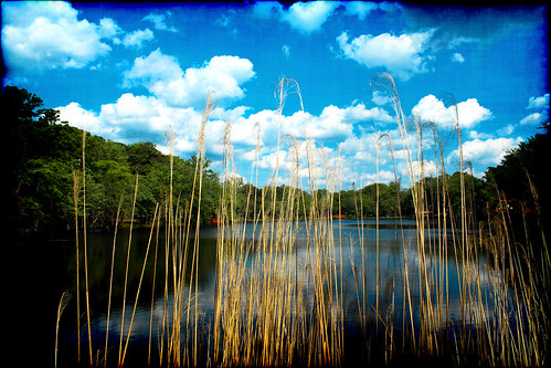 park school plants lake fish art water grass river reeds photography archway atco mullica groovyal grassesonthemullica