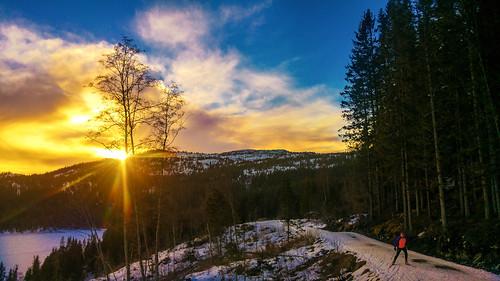bymarka trondheim grønlia norway norge norja crosscountryskiing skiing sun sunset lgg4 lgh815 nik sørtrøndelag no skjellbreia tree trees colorefexpro phonecamera