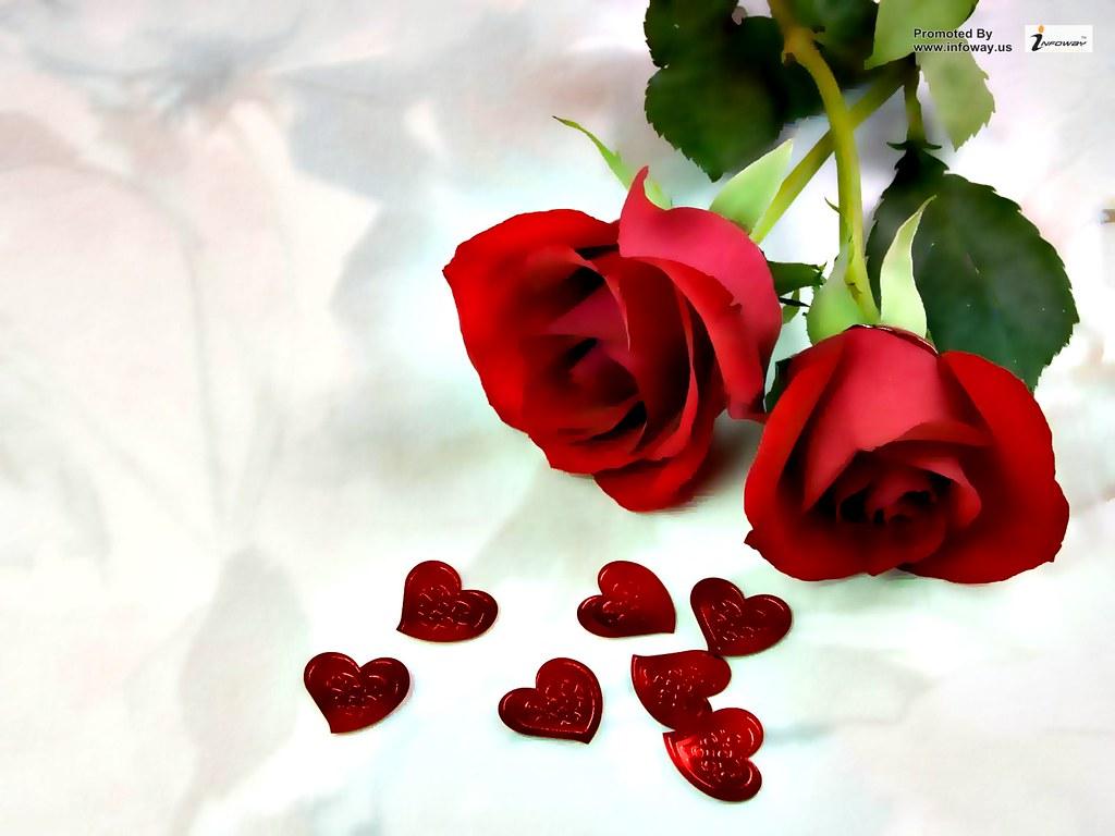 Rose Love Beautiful Hd Wallpaper Rose Love Beautiful Hd Wa Flickr