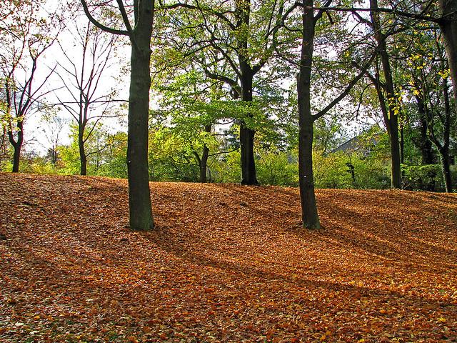 Herbst am Schlachtensee in Berlin