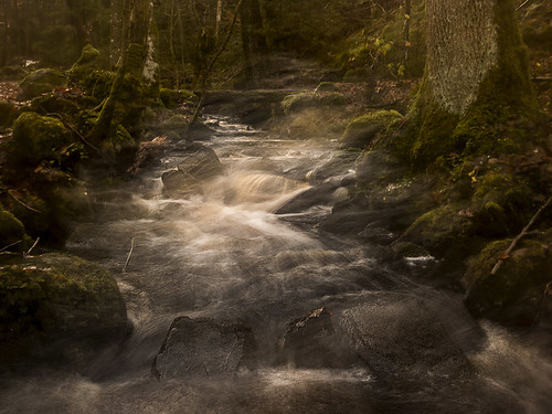 trees water creek forest river flow moss woods stream sweden stones bushes icm halland mygearandme
