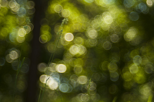 longing for green   by Lamson/Ng