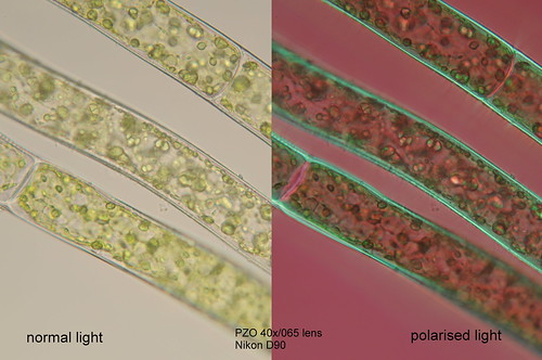 Normal and polarised light in microphotography | by Michal Kukla