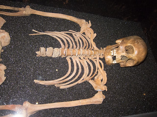 Human skeleton | by quinet