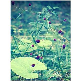 おはこんち 秋の花、ワ・レ・モ・コ・ウ♬*゜ って5文字を聞くと ...
